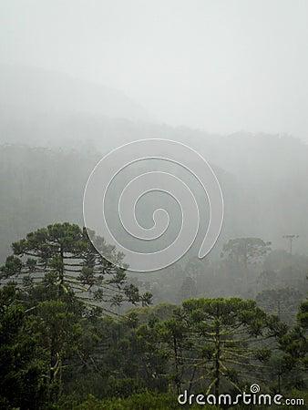 Weather Rainforest Brazil Landscape