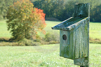 Weathered Birdhouse in a Meadow