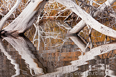 Weathered dead trees mirrored on rippled surface