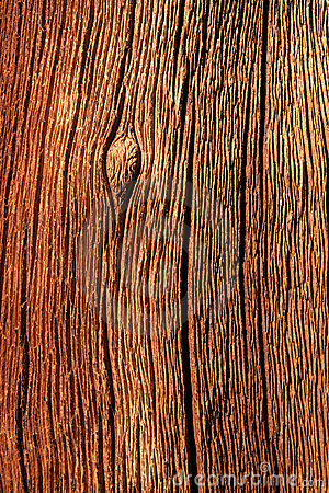 Free Weathered Trunk Detail Royalty Free Stock Image - 9858506