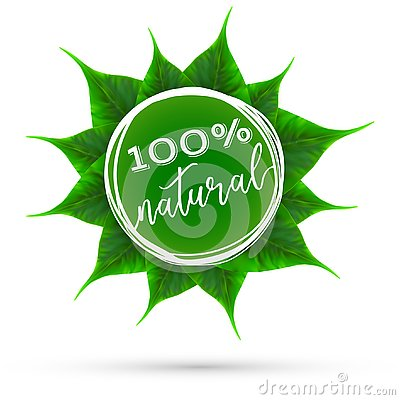 Realistic vector green leaves rosette eco theme Vector Illustration