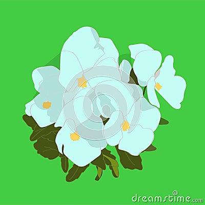 White violets Stock Photo