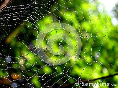 Web Art