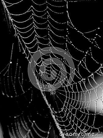 Web di ragno infradiciato rugiada