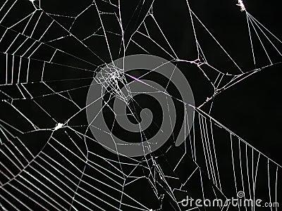 Web di ragno a struttura di notte