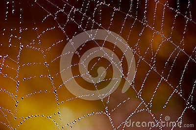 Web with tiny water drops