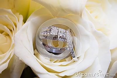 Wedding bands in rose