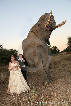 Wedding Couple with elephant