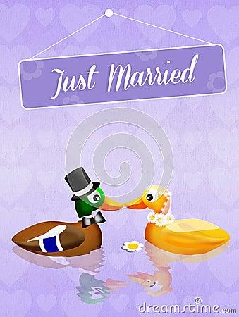 Wedding of ducks