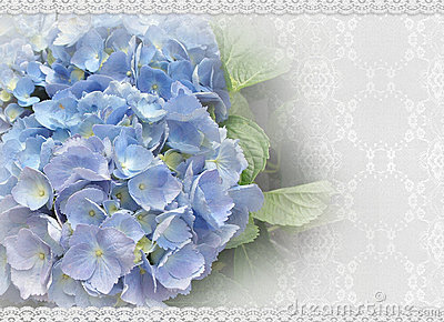 Wedding invitation Hydrangea and lace