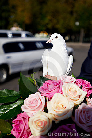 Wedding pigeon fortunately the groom and the bride
