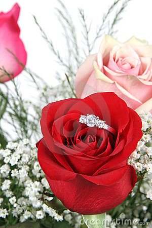 Wedding ring in red rose