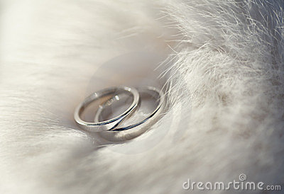 Wedding rings on fur boa.