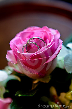 Free Wedding Rings In A Pink Rose Royalty Free Stock Photos - 12285628