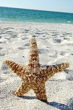 Free Wedding Rings On Starfish Royalty Free Stock Photo - 7074215