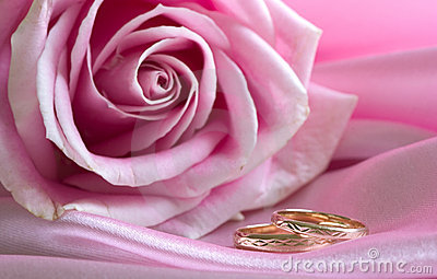Wedding rings on pink with rose