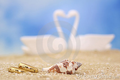 Wedding Rings and Sea Shell