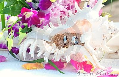 Wedding rings in seashell