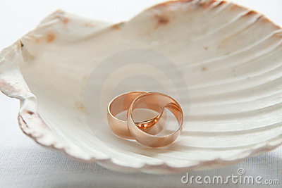 Wedding rings in seashell