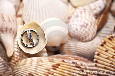 Wedding Rings on Shells