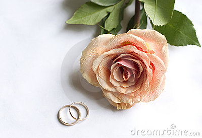 Wedding rings and single rose