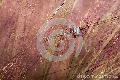Wedding rings suspended on ornamental grass