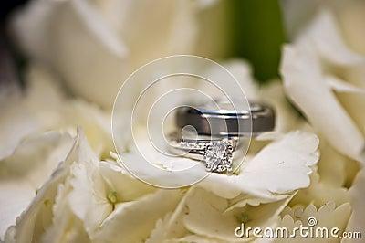Wedding rings in white flowers