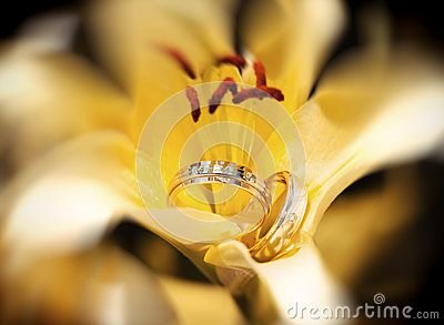 Wedding rings in the yellow flower