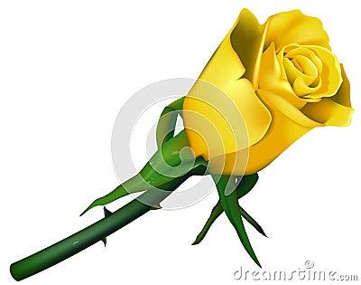 Wedding Rose Yellow