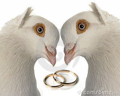 Wedding Taube
