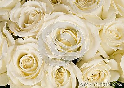 Wedding White Rose bouquet