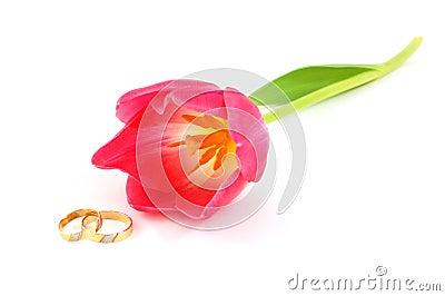 Weddings rings and tulip