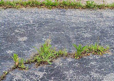 Weeds break through asphalt