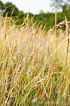 Weeds in a field