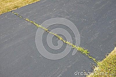 Weeds Growing in Asphalt Driveway Crack