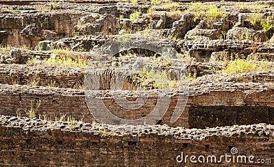 Weeds Growing From Broken Walls in Coliseum