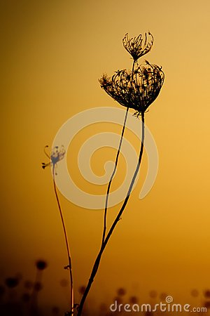 Free Weedy Plant Against The Sunset Royalty Free Stock Photo - 103951535