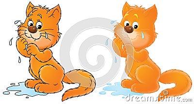 Weeping cat