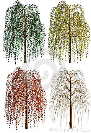 Free Weeping Willow Stock Images - 15771114