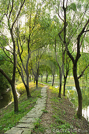 Weeping Willow Path