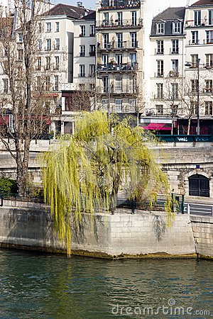 Weeping willow in the spring Paris