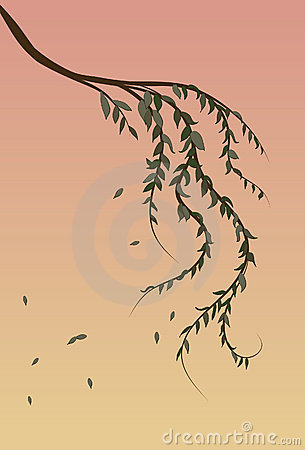 Free Weeping Willow Tree Branch Background Royalty Free Stock Photography - 12972547