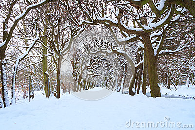 Weg in het park bij de sneeuwwinter
