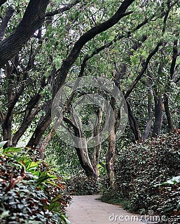 Weg in tuin die met bomen wordt behandeld