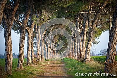 Weg van bomen