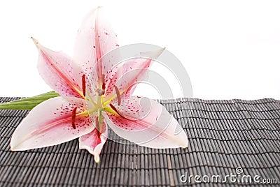Weiße Lilie auf schwarzem Bambus