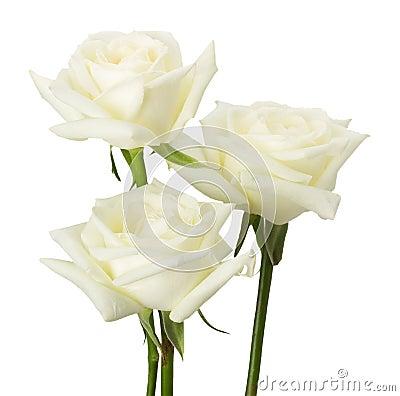 wei e rosen getrennt auf dem wei en hintergrund stockfoto bild 44080622. Black Bedroom Furniture Sets. Home Design Ideas