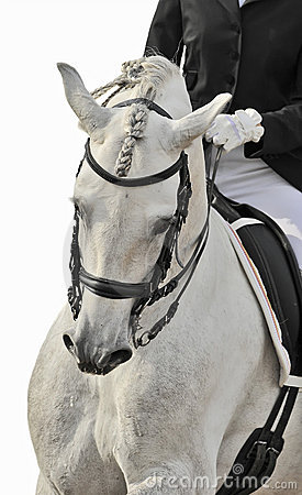 Weißes Pferd Dressage