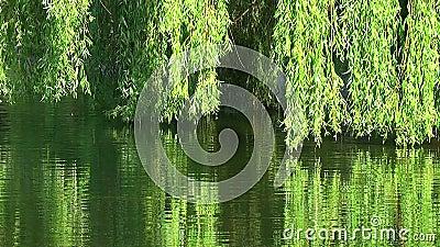 Weiden auf Wasser
