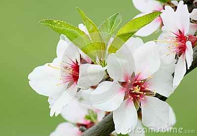 Weiße Blüte auf Baum